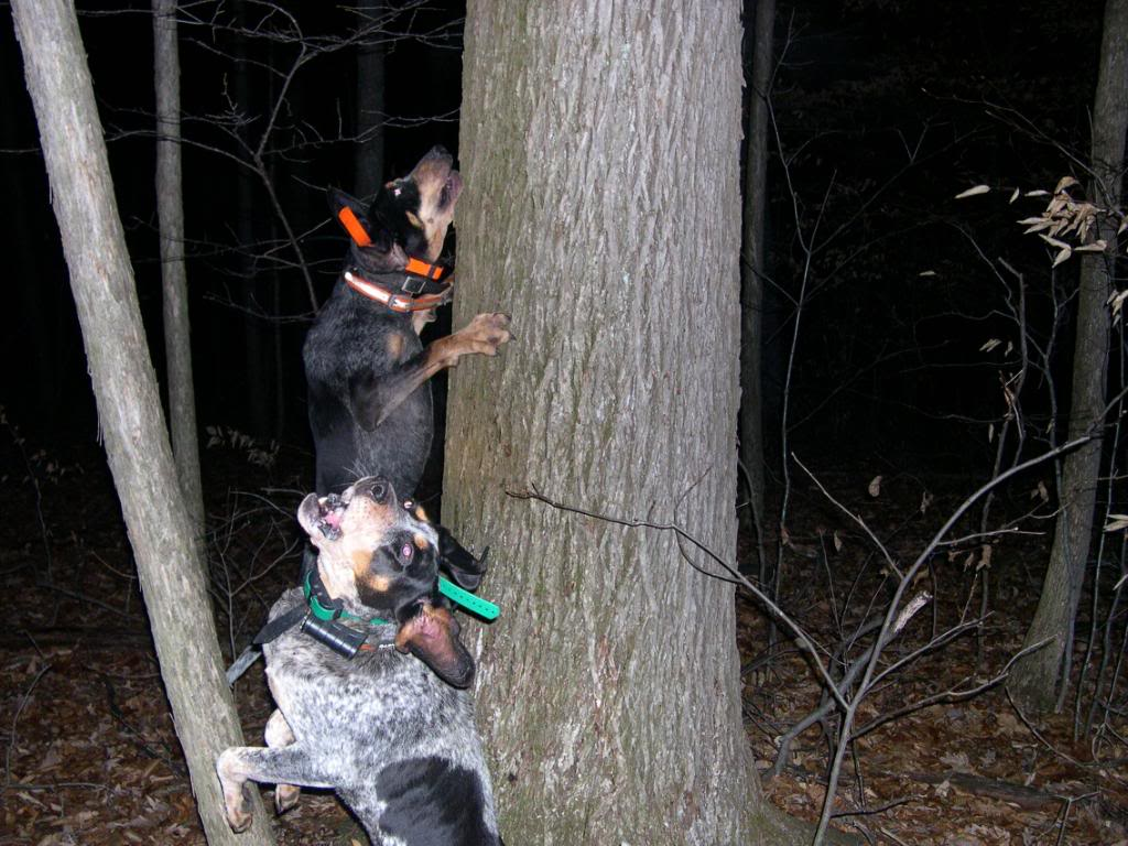 coon hunting essay Coon hunting in schuyler county illinois an essay on the theory and practice of setting out railway curves suzuki rf600r rf 600r 1995 repair service manual.