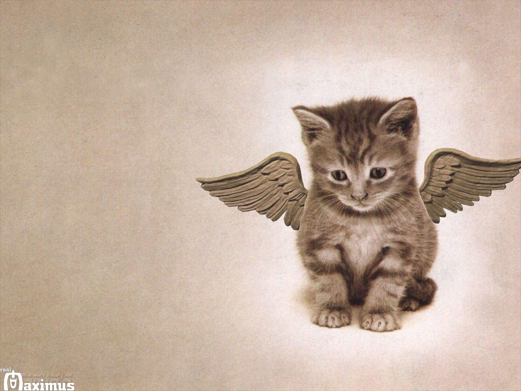 Cat Wallpaper   Cats Wallpaper 636603 1024x768