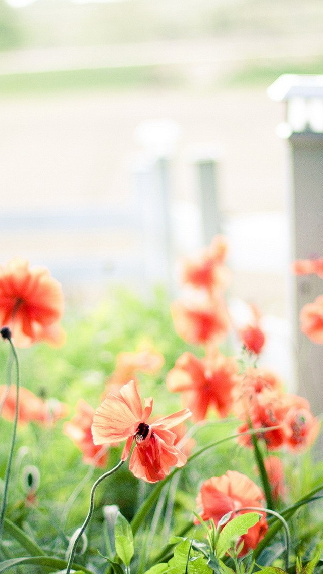 15 Beautiful iPhone 5 Wallpapers dezignHD 640x1136