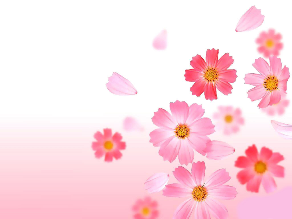 Cute Pink Flower Wallpaper Image Size 1024x768px