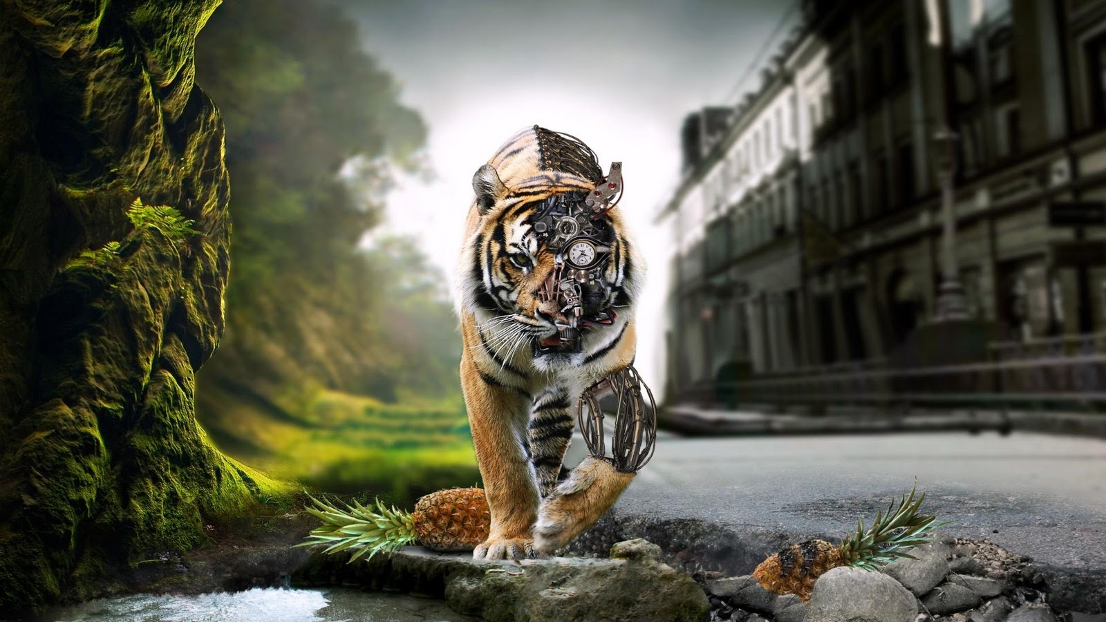 Tiger Wallpapers HD Wallpapers Desktop Wallapers High Definition 1600x900