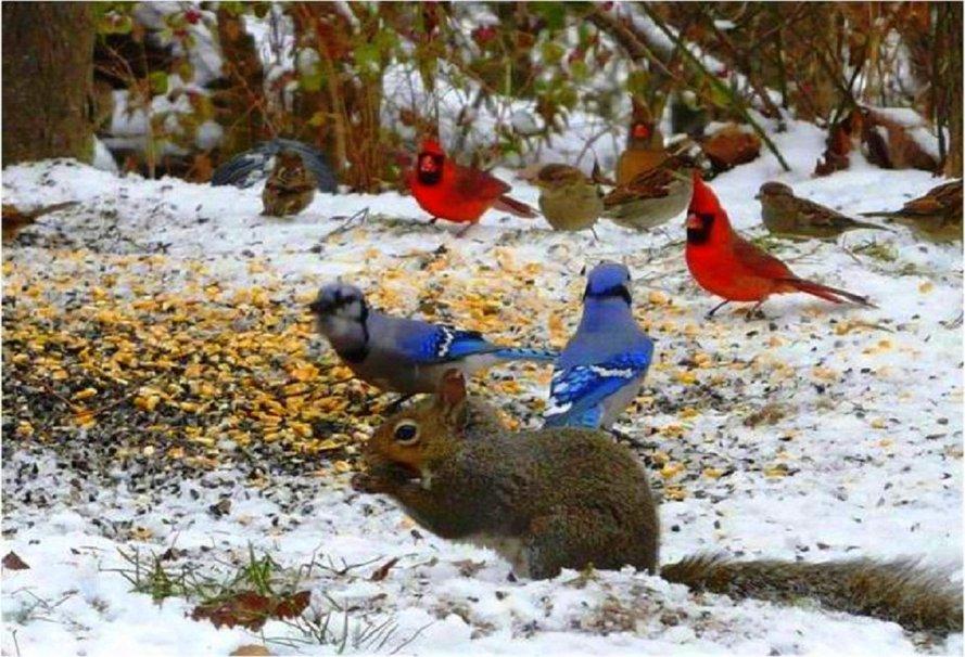 Birds in winter wallpaper   ForWallpapercom 889x606