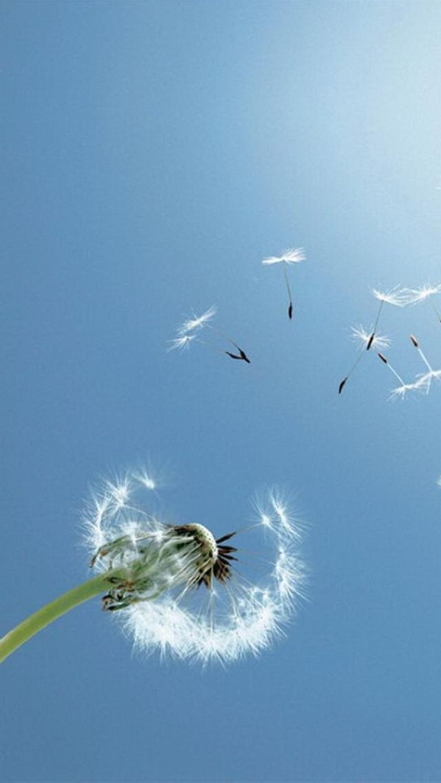 iphone 5 wallpapers hd cute flying dandelion wallpaper for iphone 5 640x1136