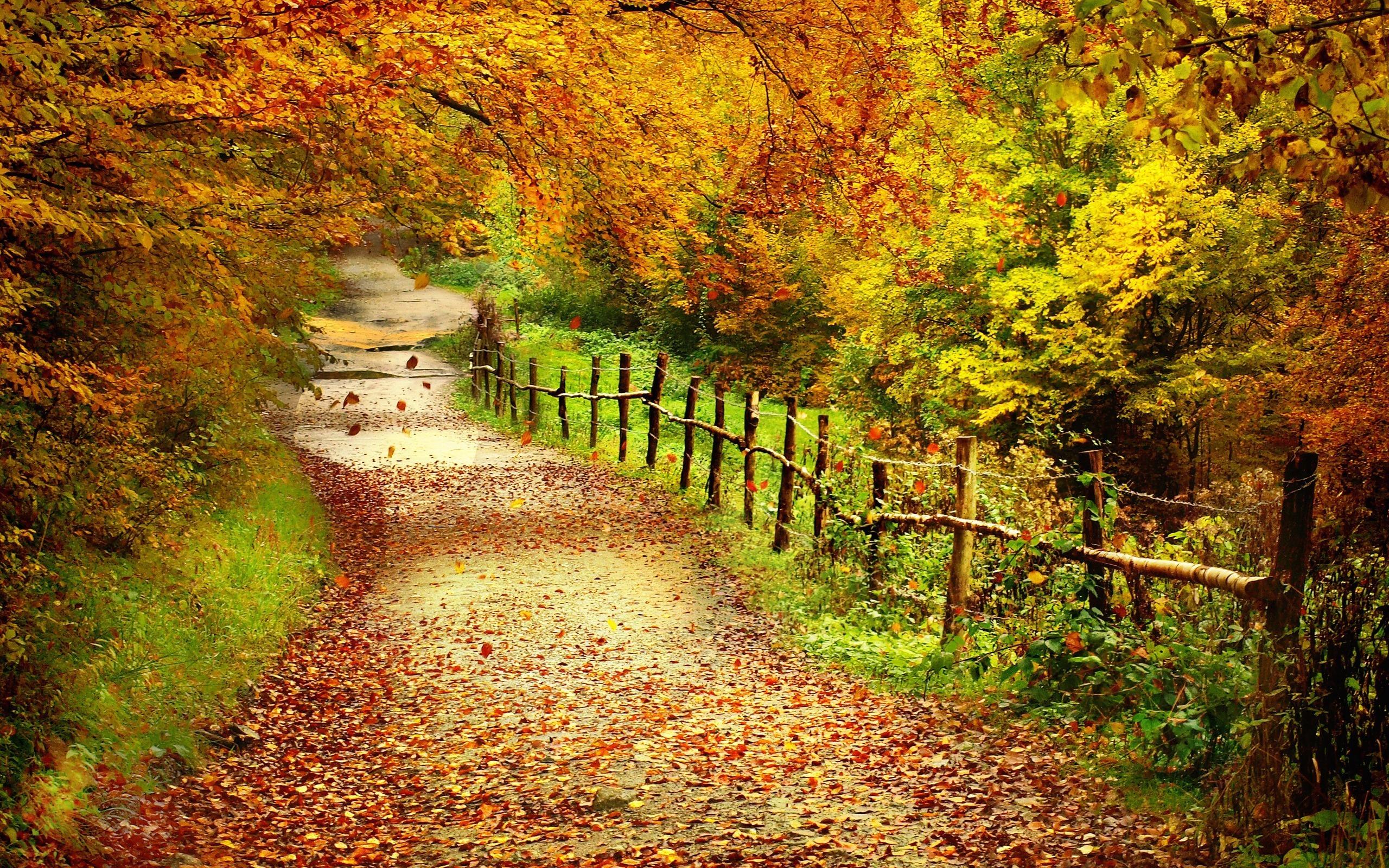 autumn scenes   Desktop Wallpaper 2560x1600
