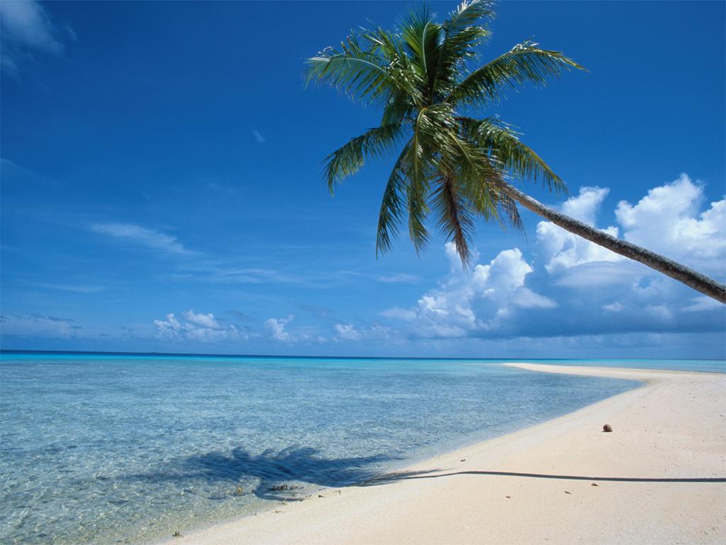 Wallpapers de Palmeras [Beach Palm Tree] Fotos e Imgenes en 1024x768
