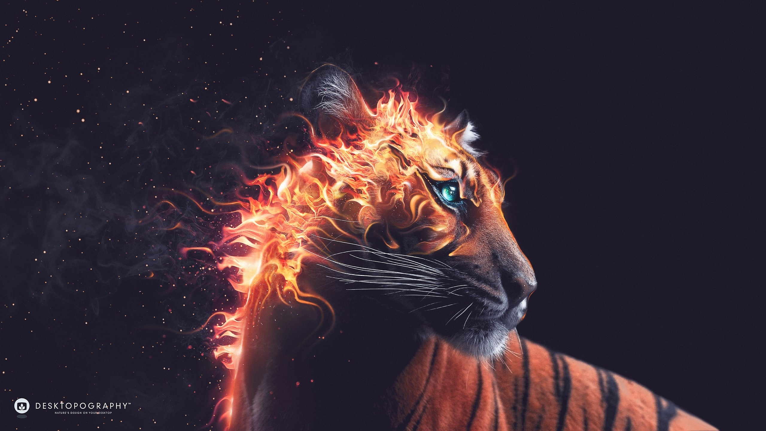 Tiger Fire Wallpapers HD Wallpapers 2560x1440
