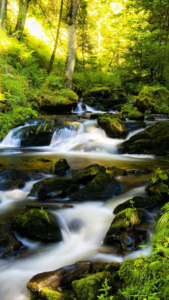 Black Forest Germany iPhone 5s Wallpaper Download iPhone Wallpapers 640x1136