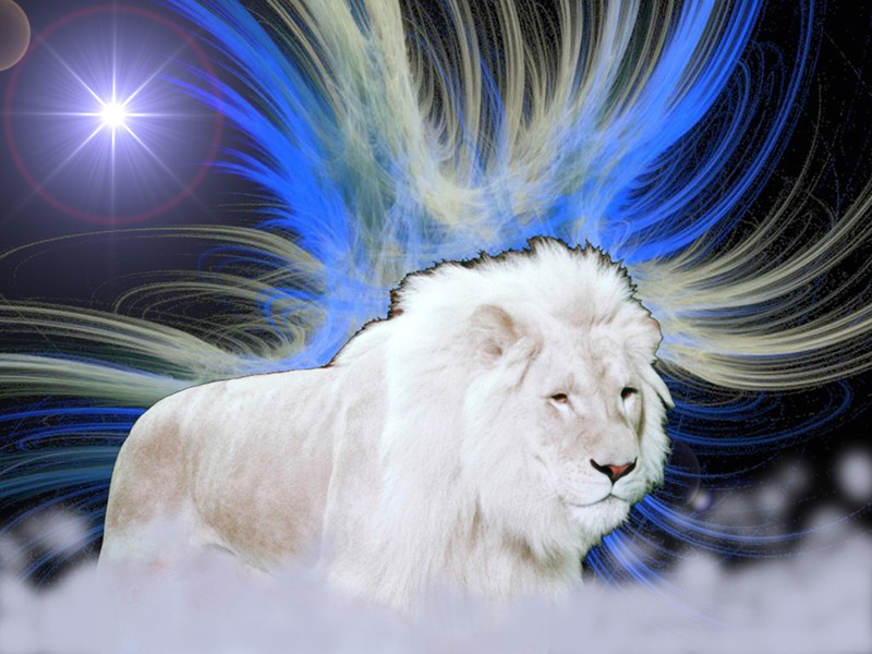 and White Lion Wallpaper for backgroundBlack and White Lion wallpaper 800x600