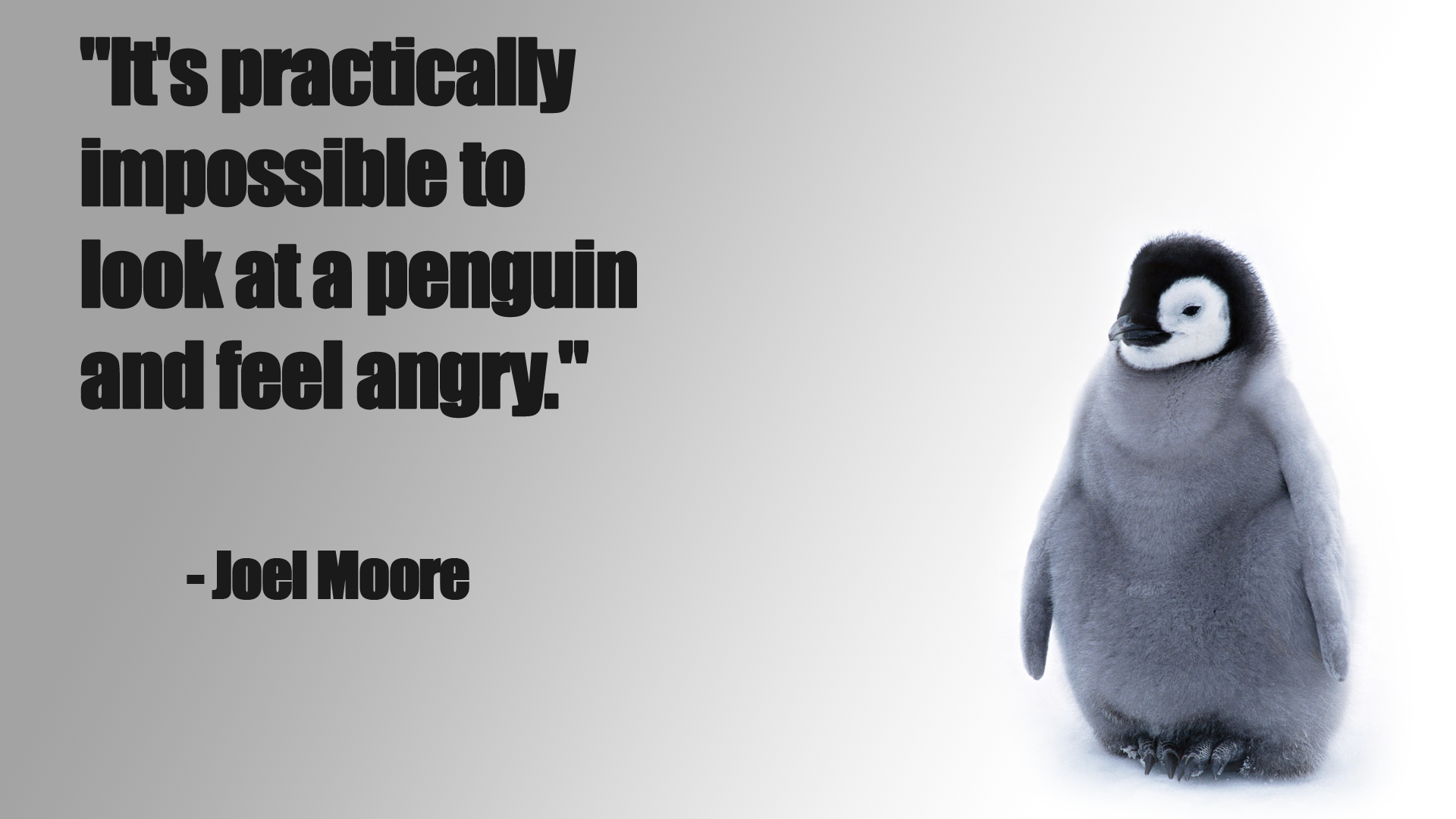 Penguin funny baby chick snow cute wallpaper 1920x1080 124241 1920x1080