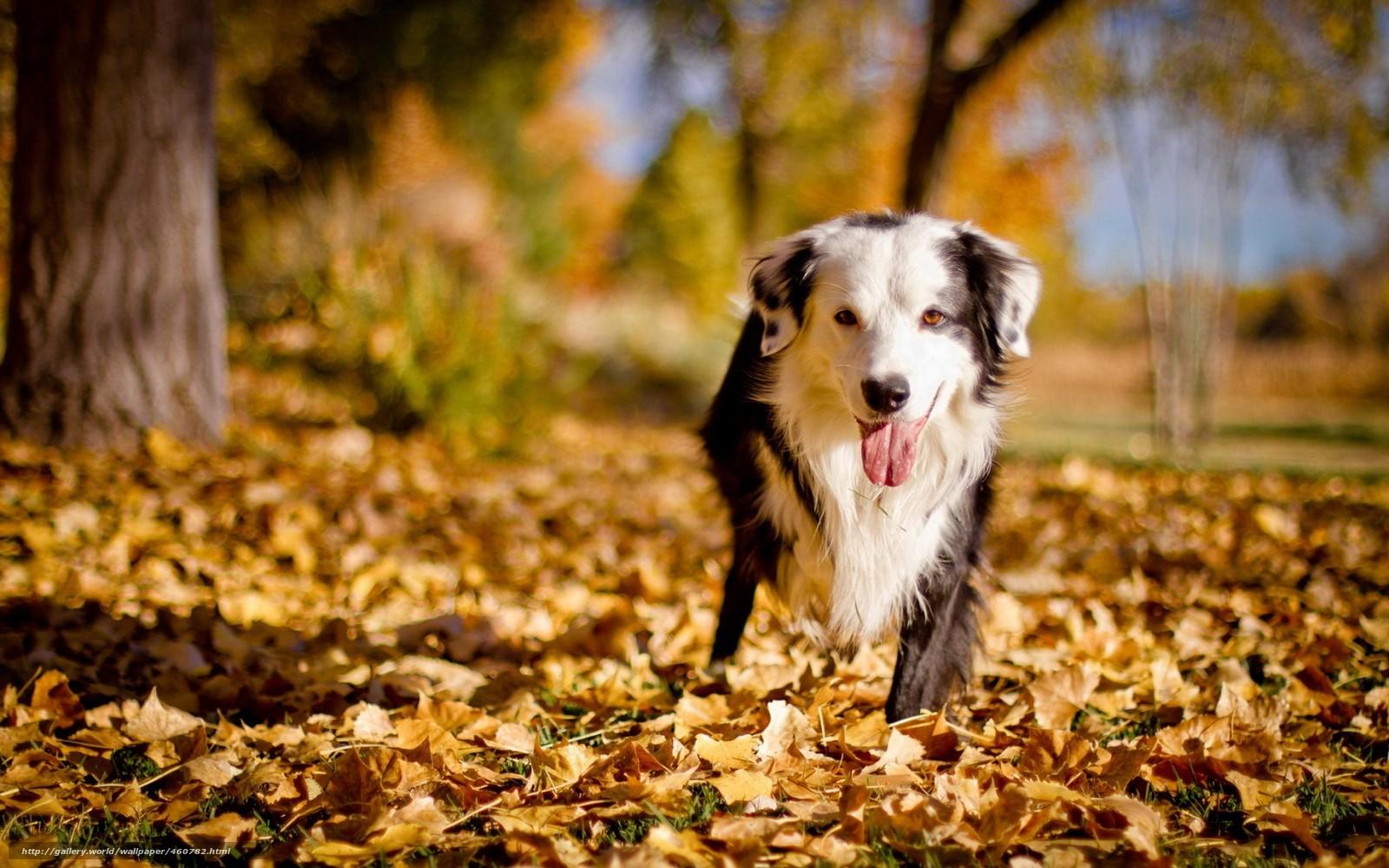Download wallpaper dog friend autumn desktop wallpaper in 1600x1000