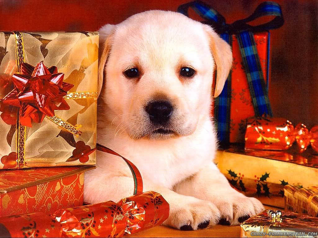 Wallpaper Puppy Christmas Dog wallpapers 1024x768