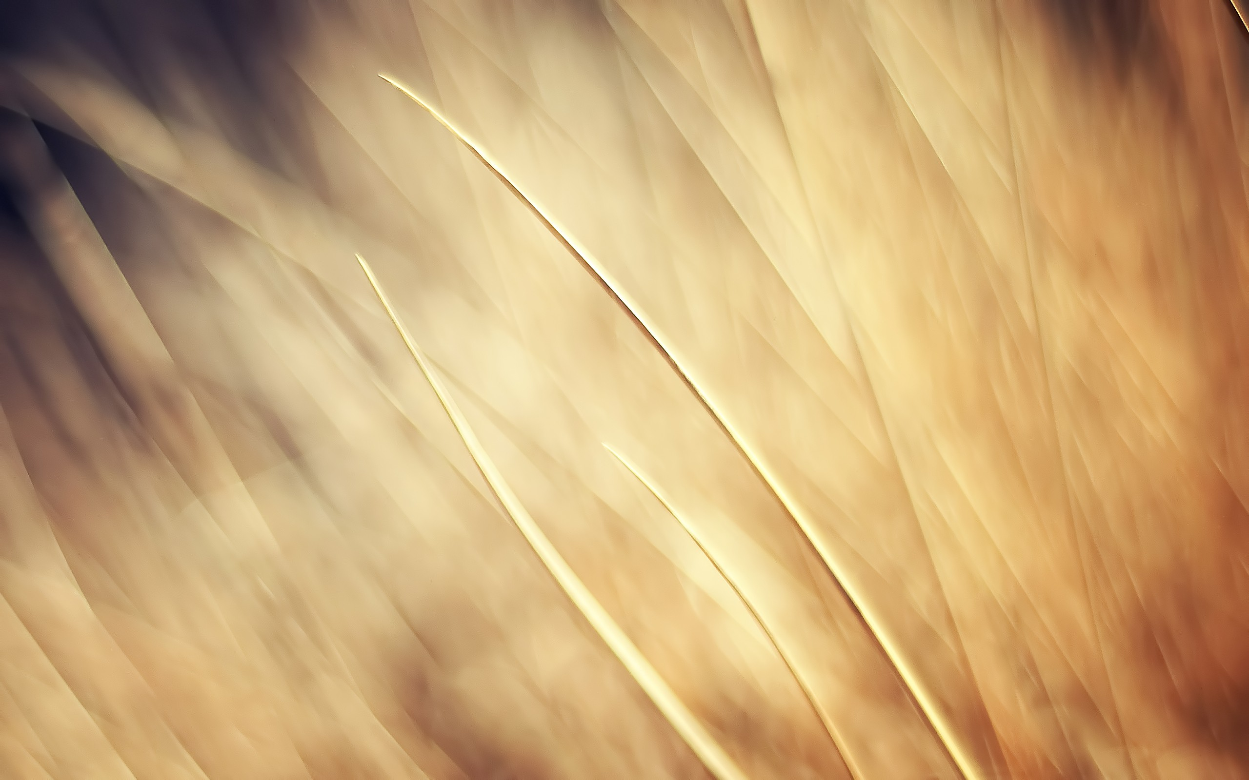 Download Wallpaper Beige abstraction on wheat field   2560x1600 2560x1600