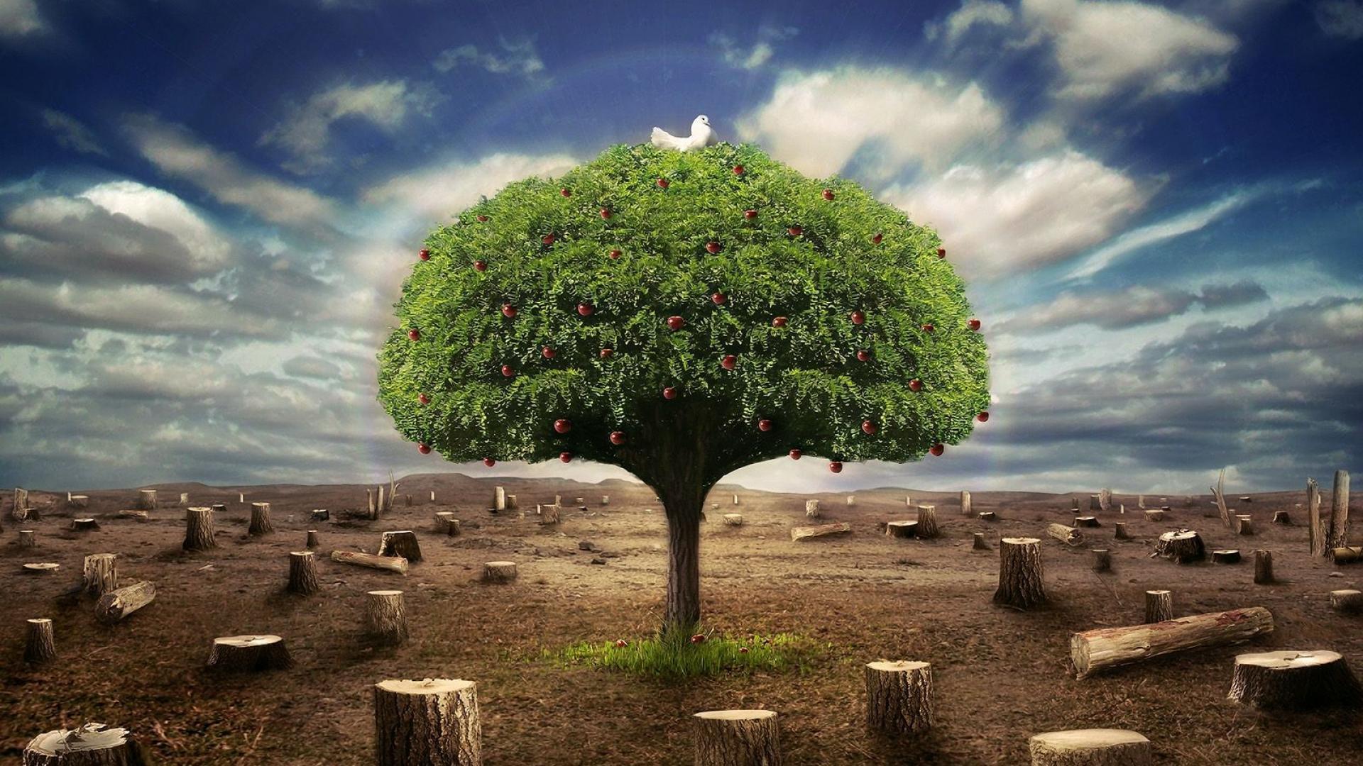 Tree Nature 3D Pictures HD Wallpaper of Nature   hdwallpaper2013com 1920x1080