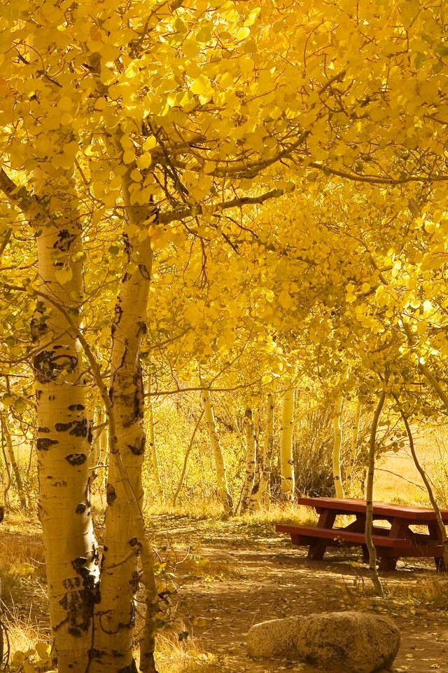 download autumn meples trees wallpapers for ipod touch 640x960