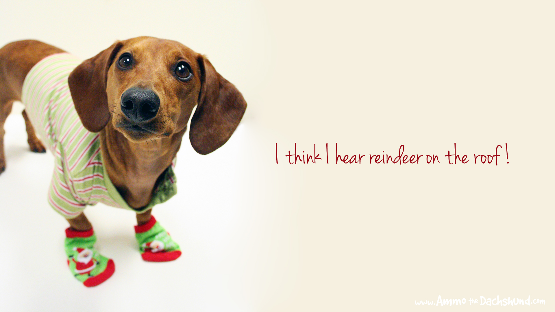 12 Days of Cheer Holiday Desktop Wallpaper Ammo the Dachshund 1920x1080