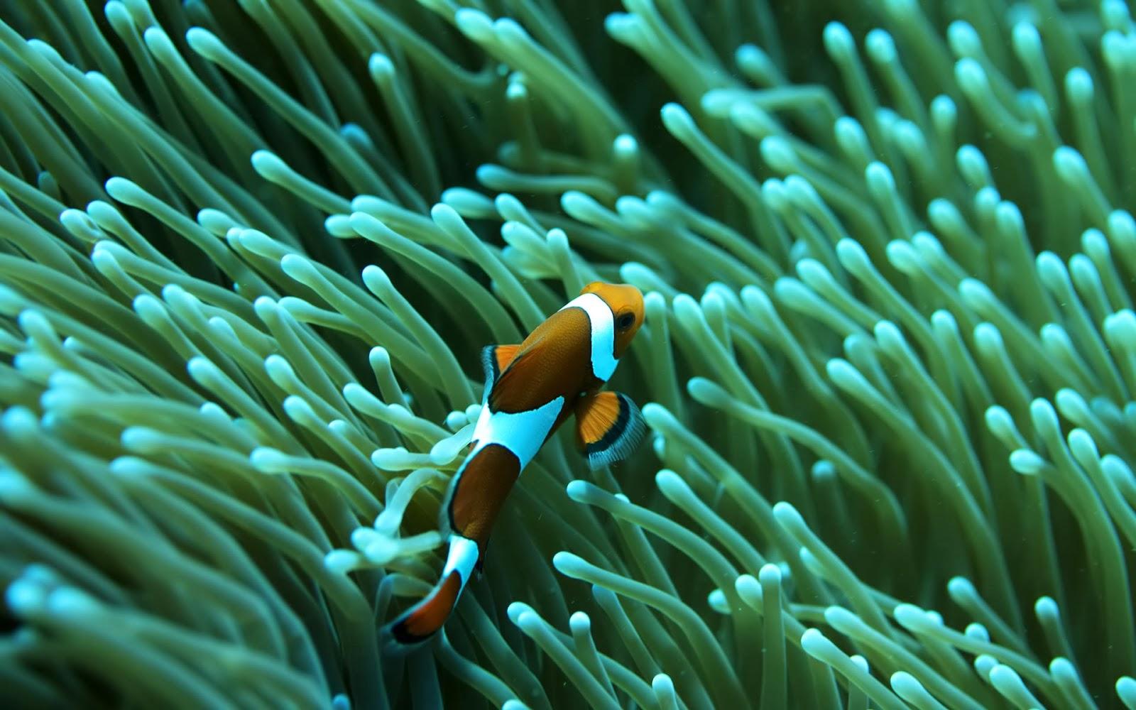saltwater aquarium reef fish wallpaper   beautiful desktop wallpapers 1600x1000