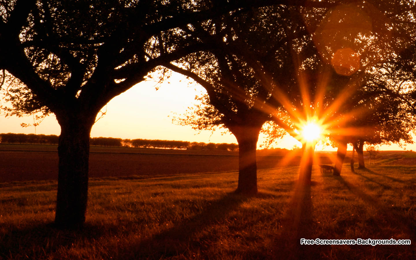 Sunset Sunrise   Screensavers and Backgrounds 1440x900