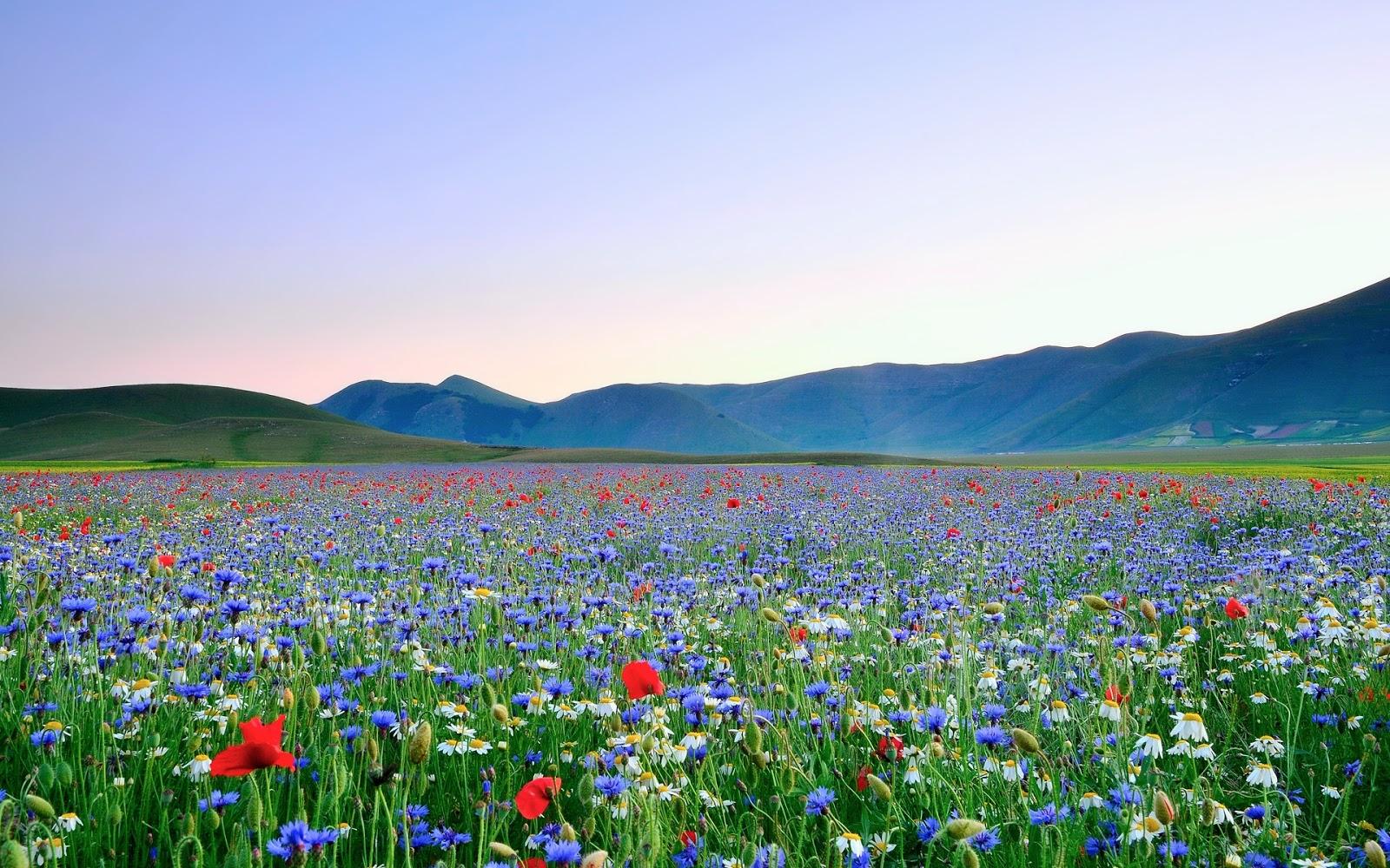 Beautiful Nature HD Wallpaper   Wallpapers 1600x1000