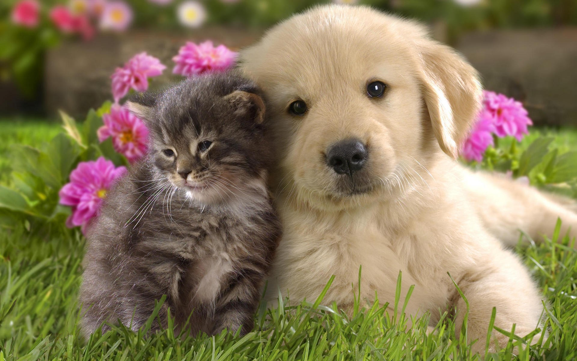 Download Cute Kitten and Puppy Wallpaper Wallpapers 1920x1200