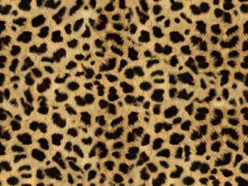 animal print wallpaper for iphone