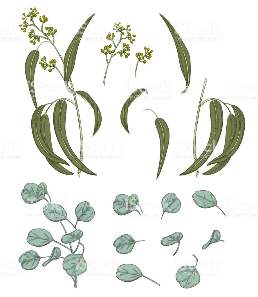 Set Of Green Leaves On White Background Digital Draw In Engraving 889x1024