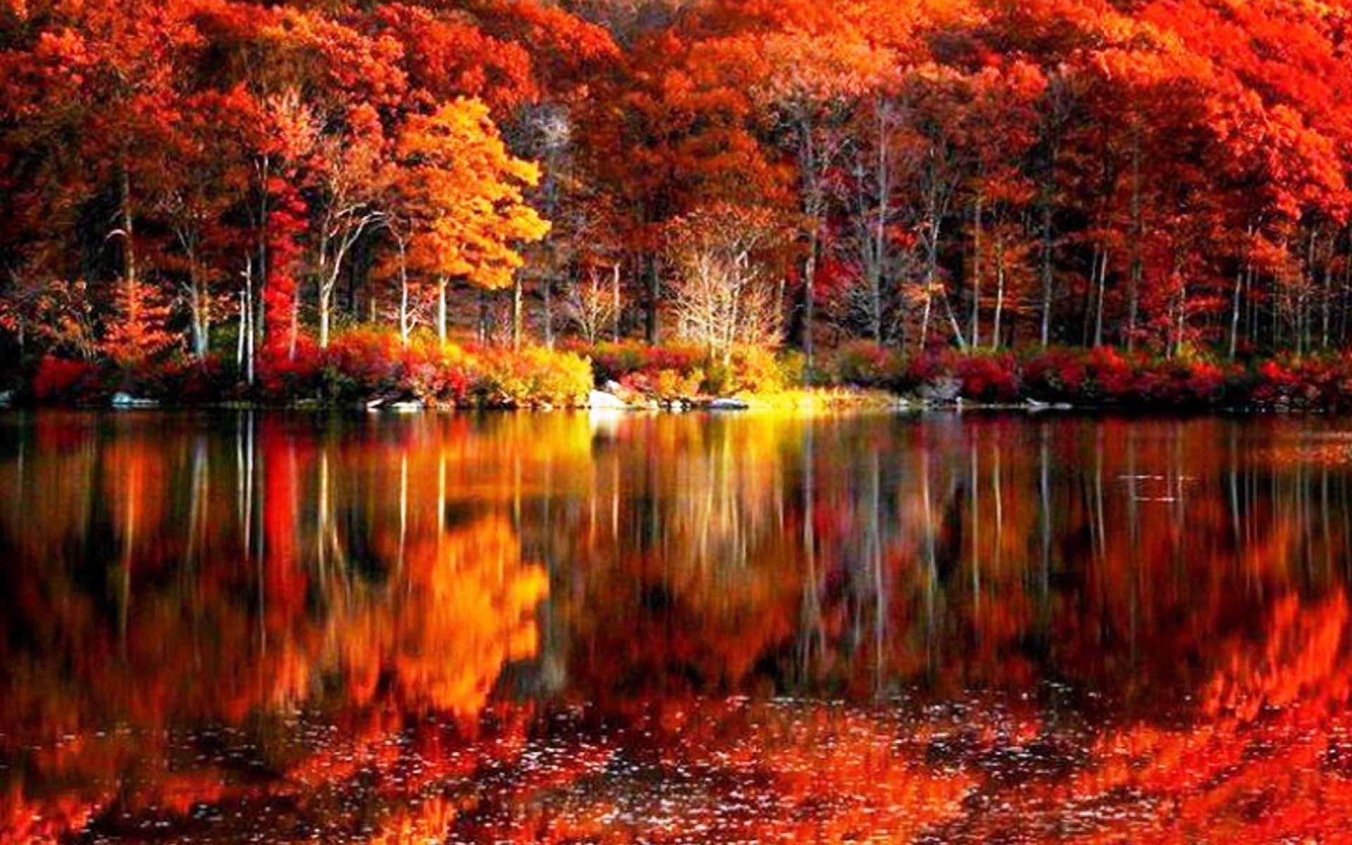 fall trees background wallpaper