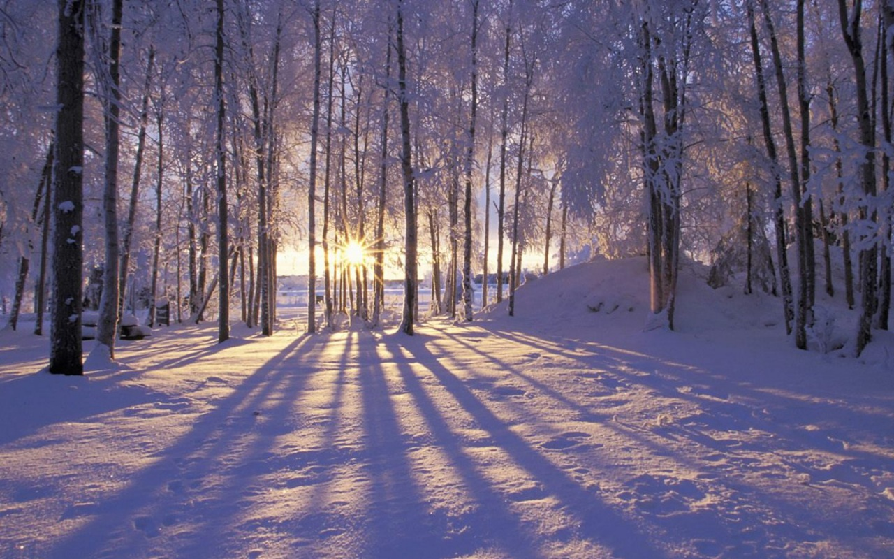 1280x800 Snowy Forest desktop wallpapers and stock photos 1280x800