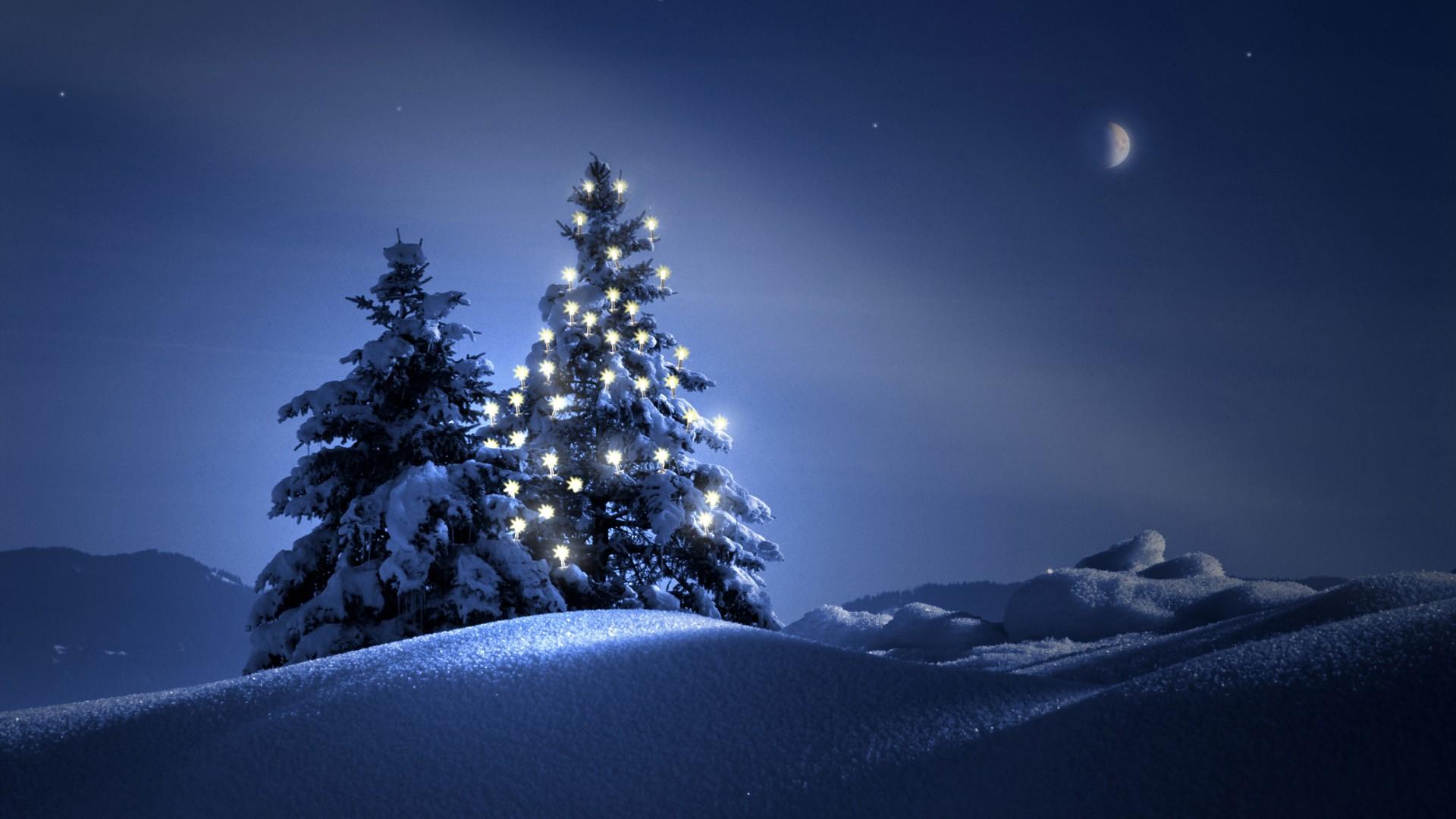 Christmas Tree On Snow Wallpaper Wide Wallpaper WallpaperLepi 1920x1080