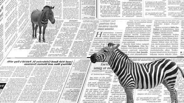 Black And White Zebra Wallpaper 600x337