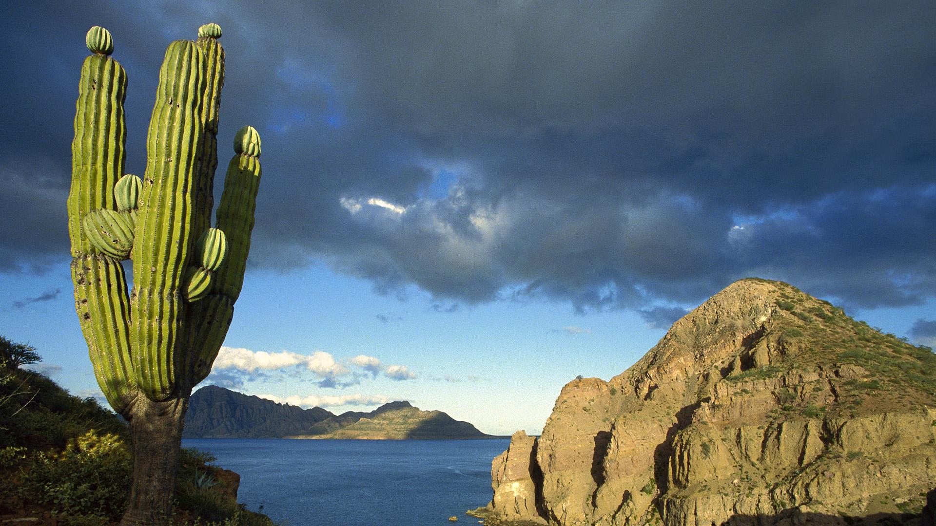Danzante Island Sea of Cortez Baja California Mexico HD 1920x1080