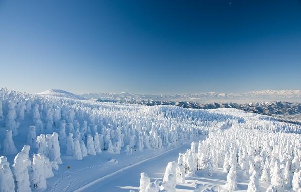 Yamagata zao onsen ski resort yamagata japan yamagata japan winter 596x380