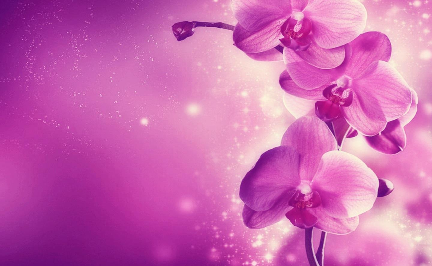 Purple pink orchid HQ WALLPAPER   164369 1440x886