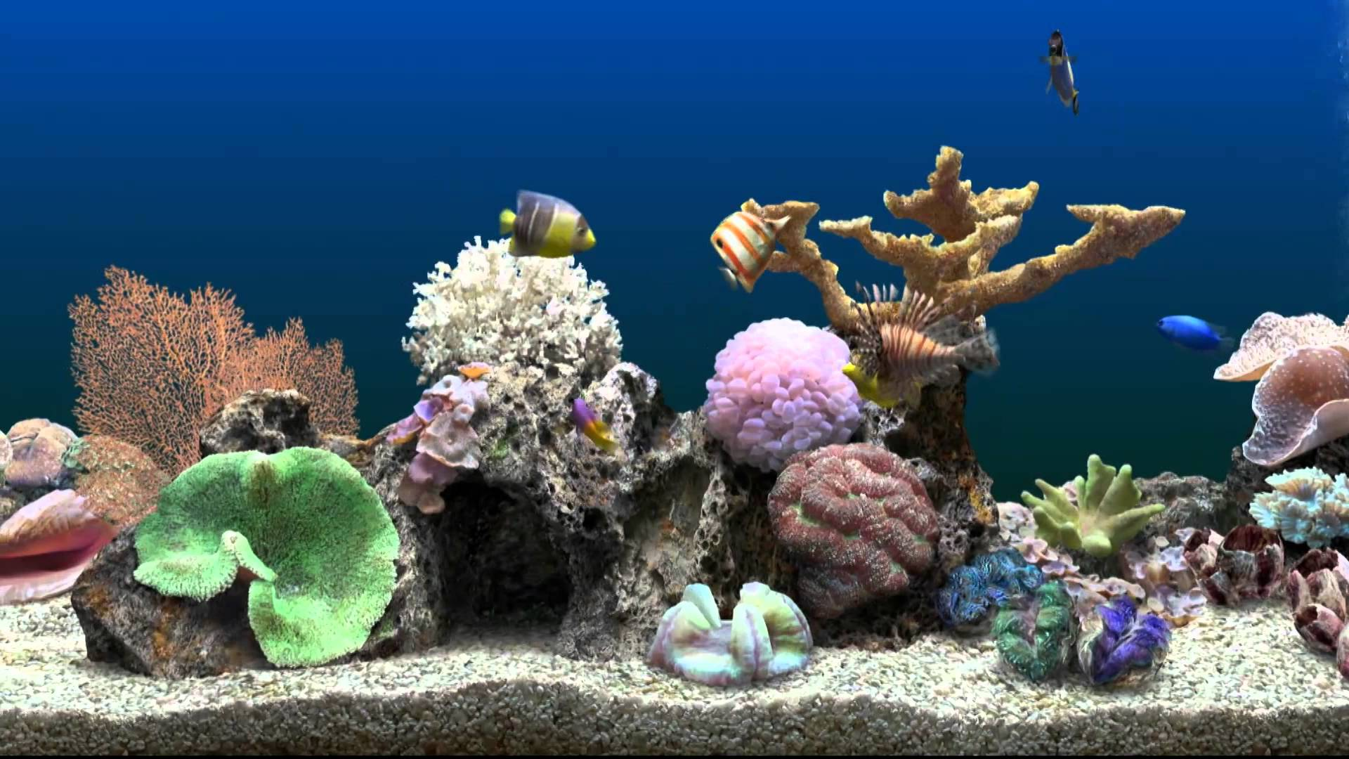 Marine aquarium wallpaper wallpapersafari for 3d fish wallpaper