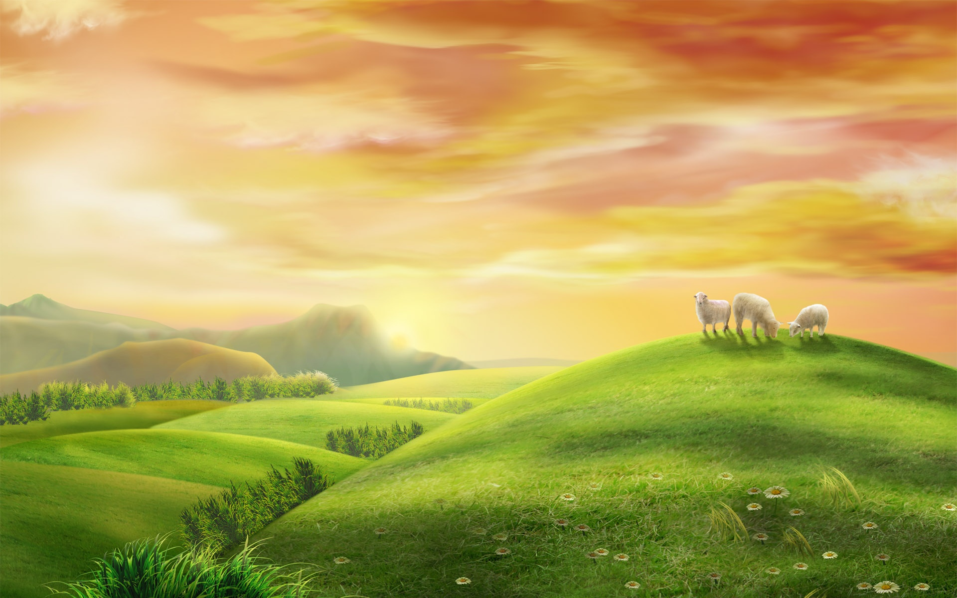 Sheep on a hill wallpaper   345617 1920x1200