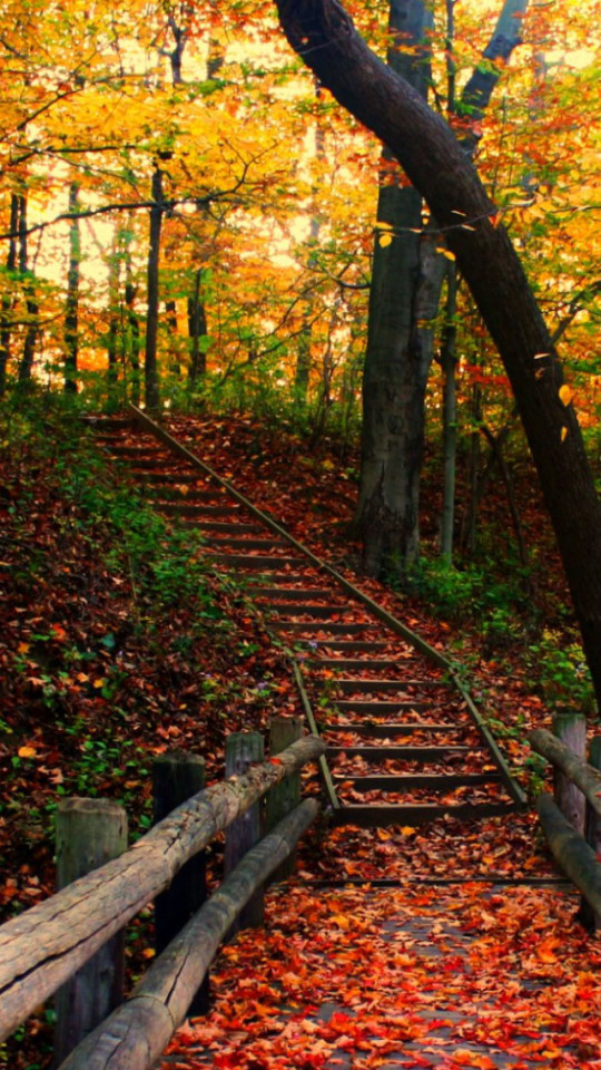 Autumn Path Wallpaper   iPhone Wallpapers 540x960