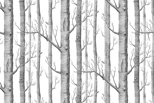 Murals wallpaper illustrated birch tree forest 538x358
