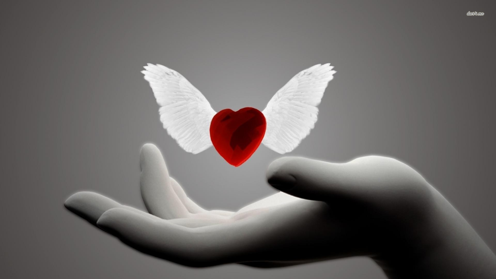 Heart with wings wallpaper 1280x800 Heart with wings wallpaper 1920x1080