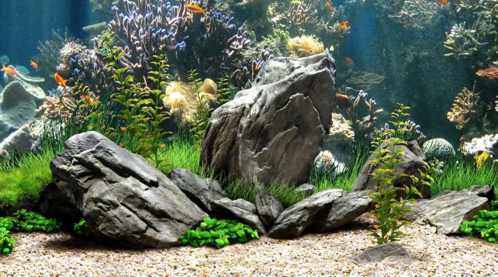 Free Download Home Cool Fish Tanks Cool Fish Tanks Hd Wallpaper Quotes 1024x570 For Your Desktop Mobile Tablet Explore 50 Cool Fish Wallpapers 3d Tropical Fish Desktop Wallpapers Fish