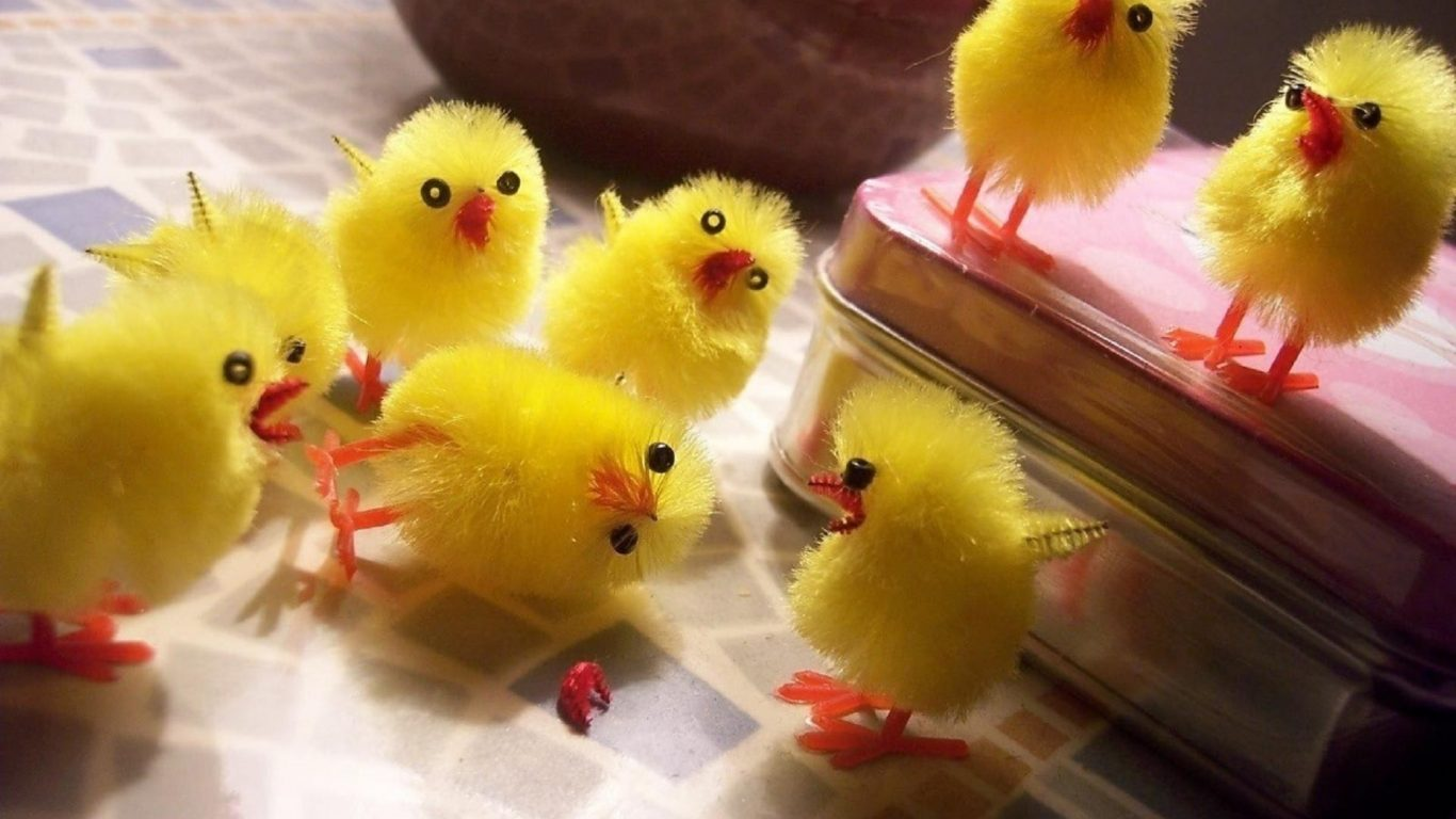 Baby Animals Humor Toys Chickens Chicks Cute Easter Birds Images 1366x768