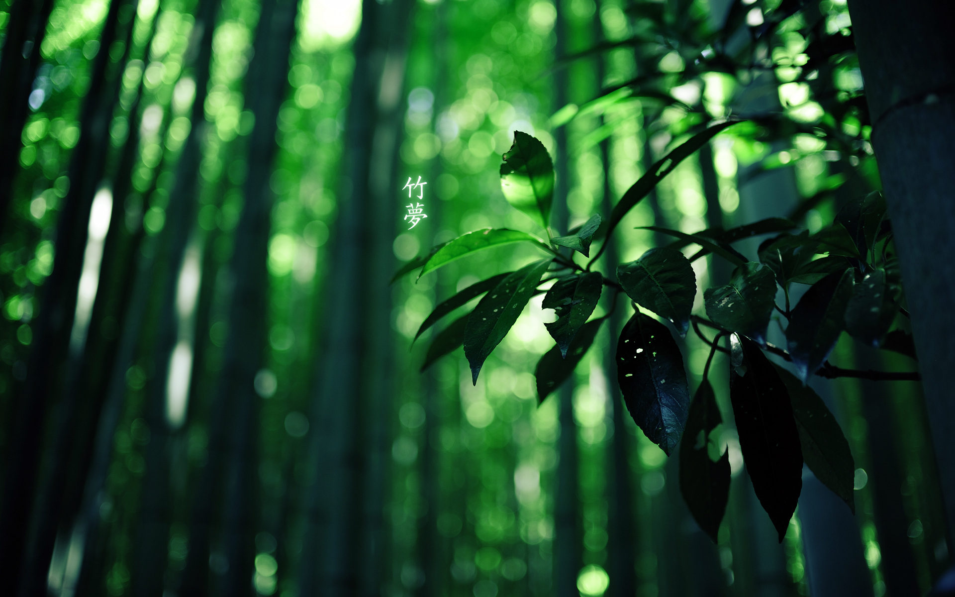 bamboo wallpaper hd - wallpapersafari
