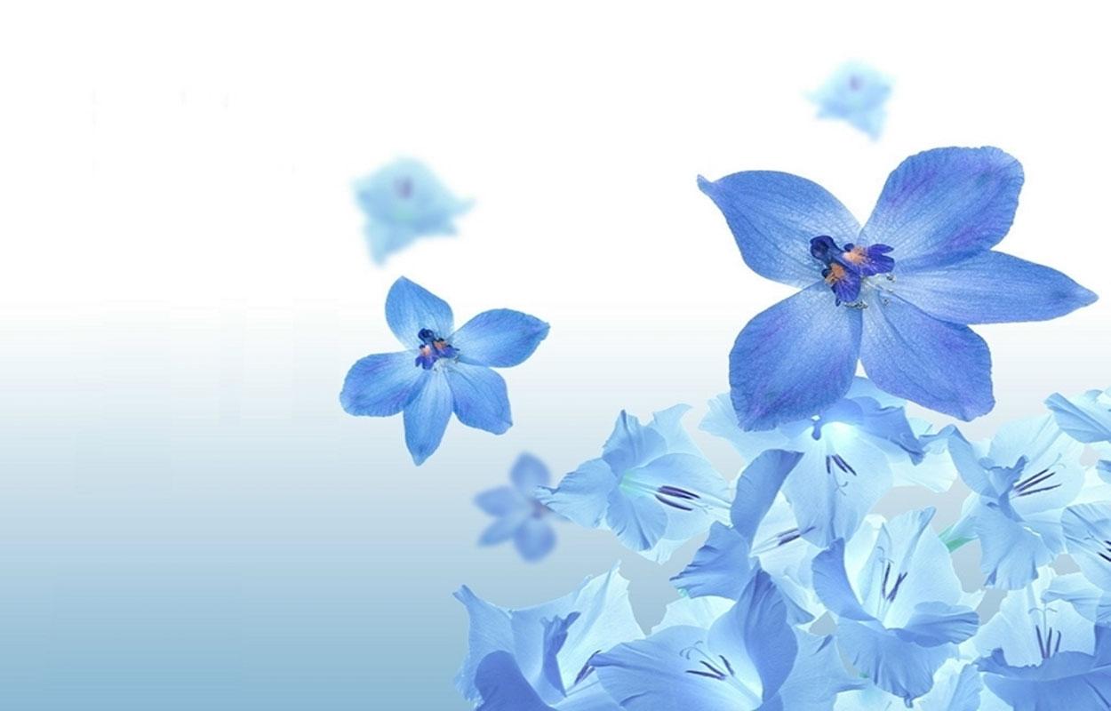 Summer Flower Blue Flowers 1250x800