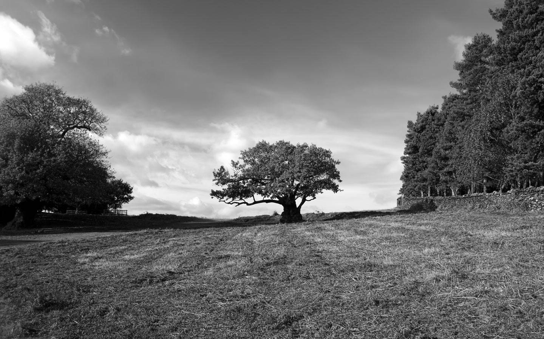 Oak Tree 1440900 Wallpaper 800681 1440x900