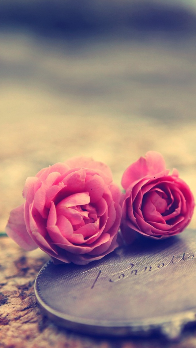 Miniature Roses iphone 5s wallpaper   Best iPhone 5s wallpapers 640x1136