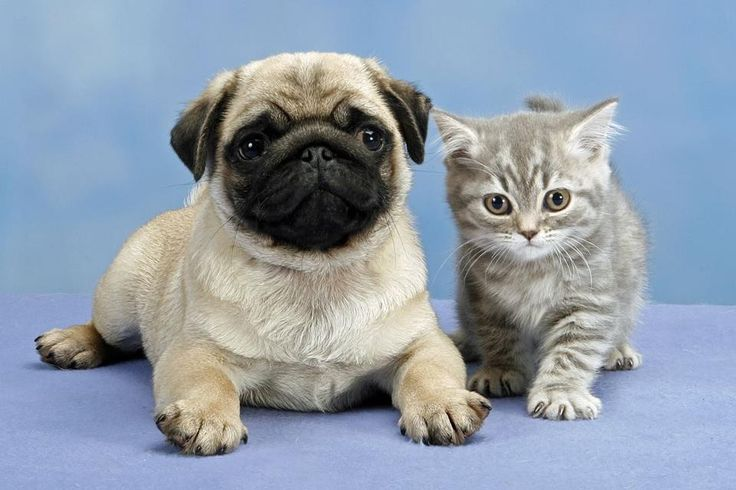 Wallpapers Of Kittens And Puppies - The
