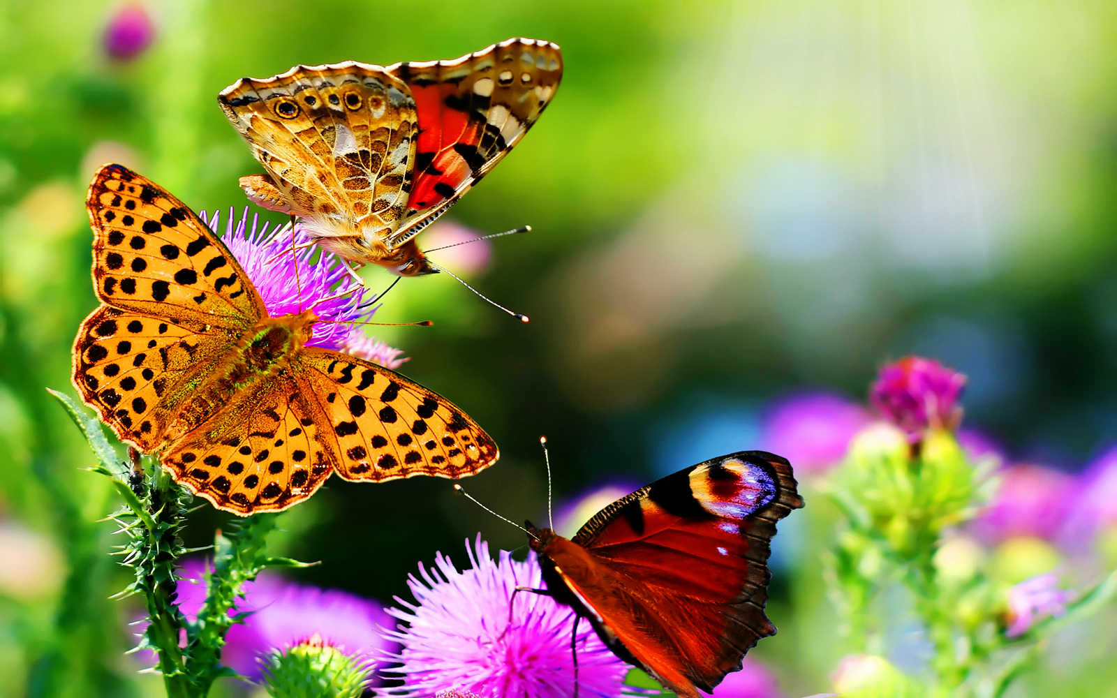 48 Nature Butterfly Wallpaper On Wallpapersafari