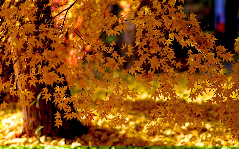 free autumn wallpaper for desktop   HD Desktop Wallpapers 2880x1800