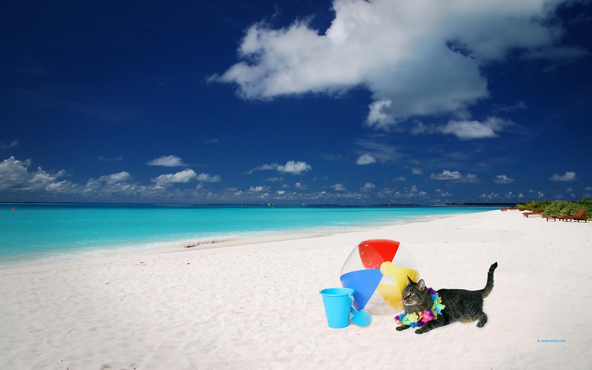 beach for wallpaper 3x6summer - photo #15
