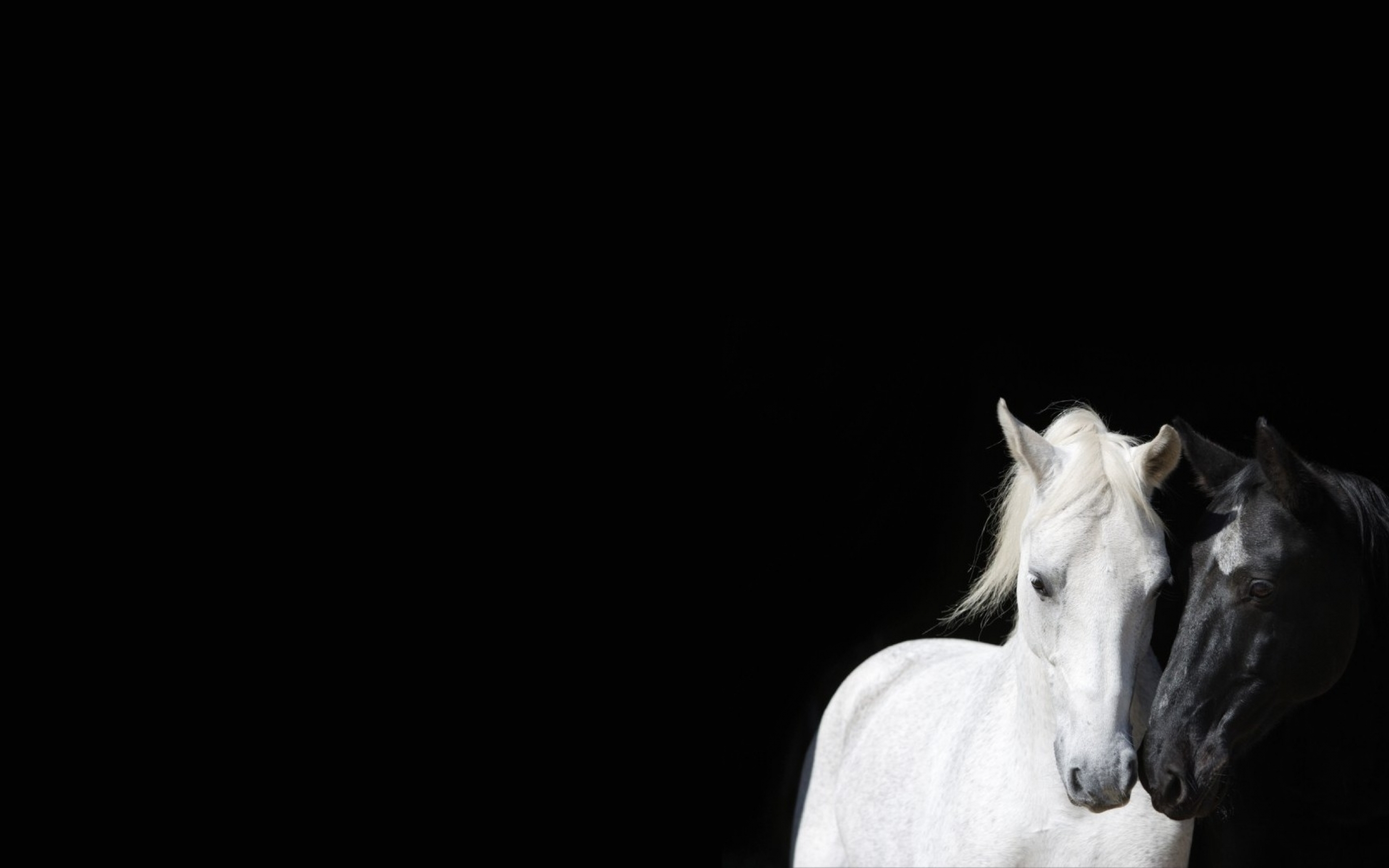 Download Wallpapers Download 2560x1600 black and white animals horses 2560x1600