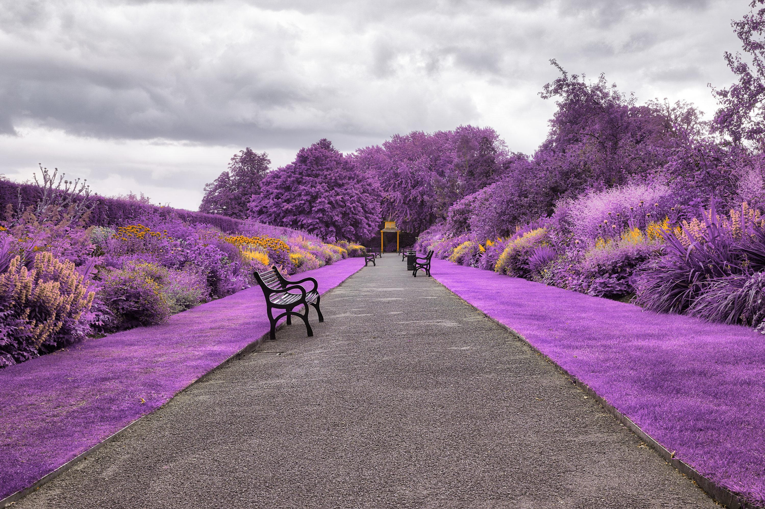 Belfast Botanic Gardens in Northern Ireland Wallpaper HD City 4K 2999x1999