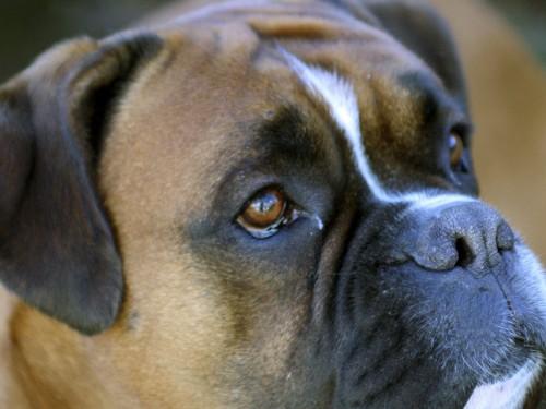 Dog Screensaver Screensavers   Download Dog Screensaver 500x375